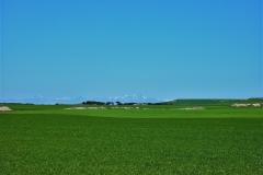 409-Champs de blé près de San Bol (2)