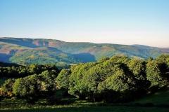 606-Forêt après Sarria-4.06.10 (2)