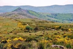 via-stevensonia-paysage-chaotique